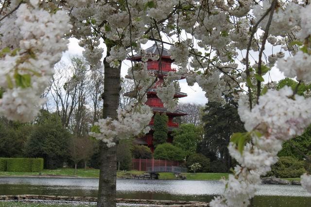 06-japanese-pagoda-koninklijke-serres-van-laken