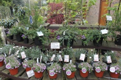 12-winkel-in-arboretum-kalmthout